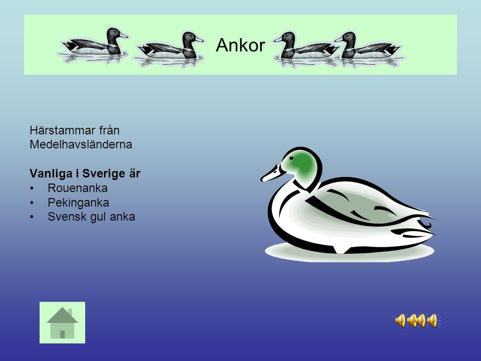 Får Fåret är nära släkt med geten och är ursprungligen ett fjälldjur. I Sverige finns bl a Gotländskt utegångsfår Vitt fastlandsfår