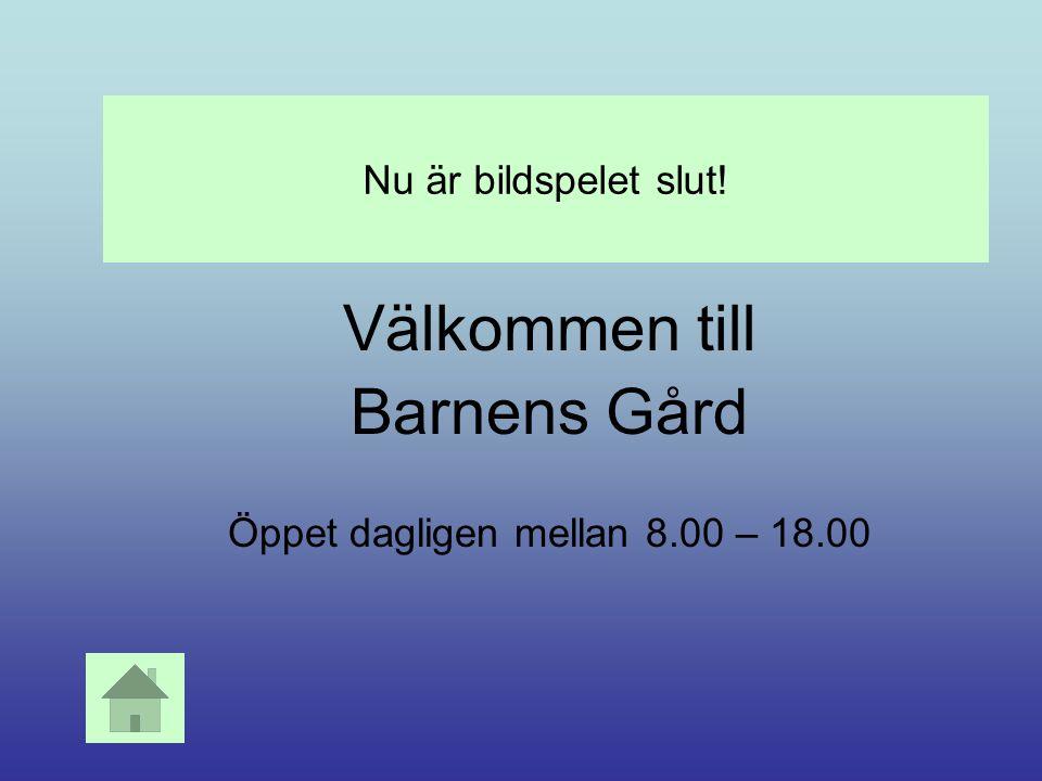 Ankor Härstammar från Medelhavsländerna Vanliga i Sverige är Rouenanka Pekinganka Svensk gul anka