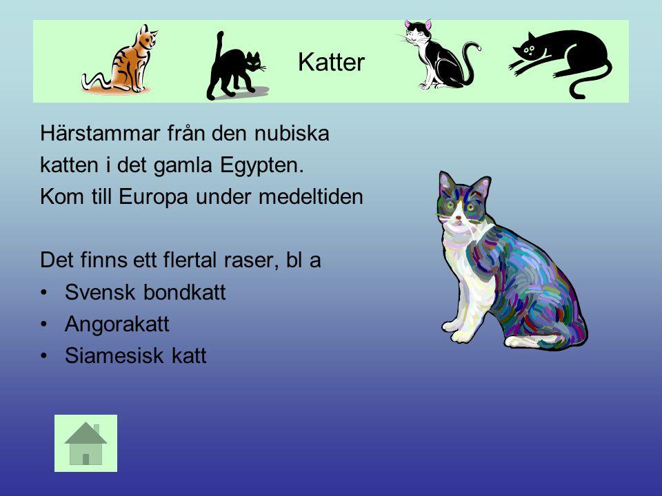 Hundar Hunden härstammar från vildhunden Det finns ca 100 raser i Sverige och totalt 300 i världen. Användes ursprungligen vid jakt, men idag mest som