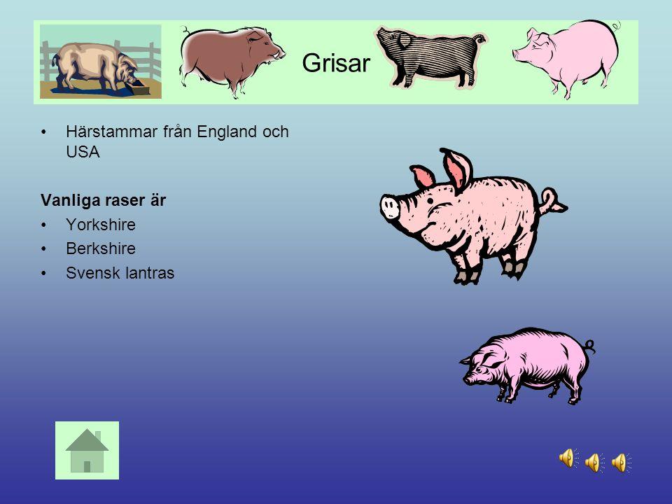 Kor Under 1500 – talet importerades olika raser till Sverige Det finns flera raser, bl a SRB, svensk röd och vit boskap SLB, Svensk Låglandsboskap Fjä