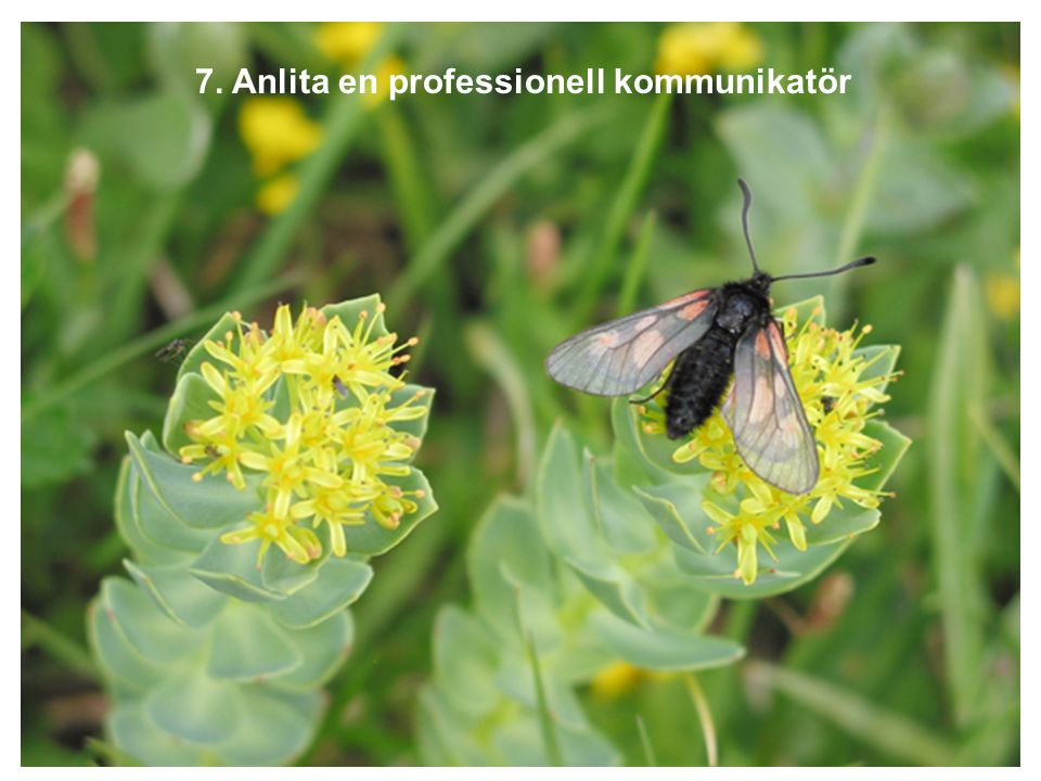 7. Anlita en professionell kommunikatör
