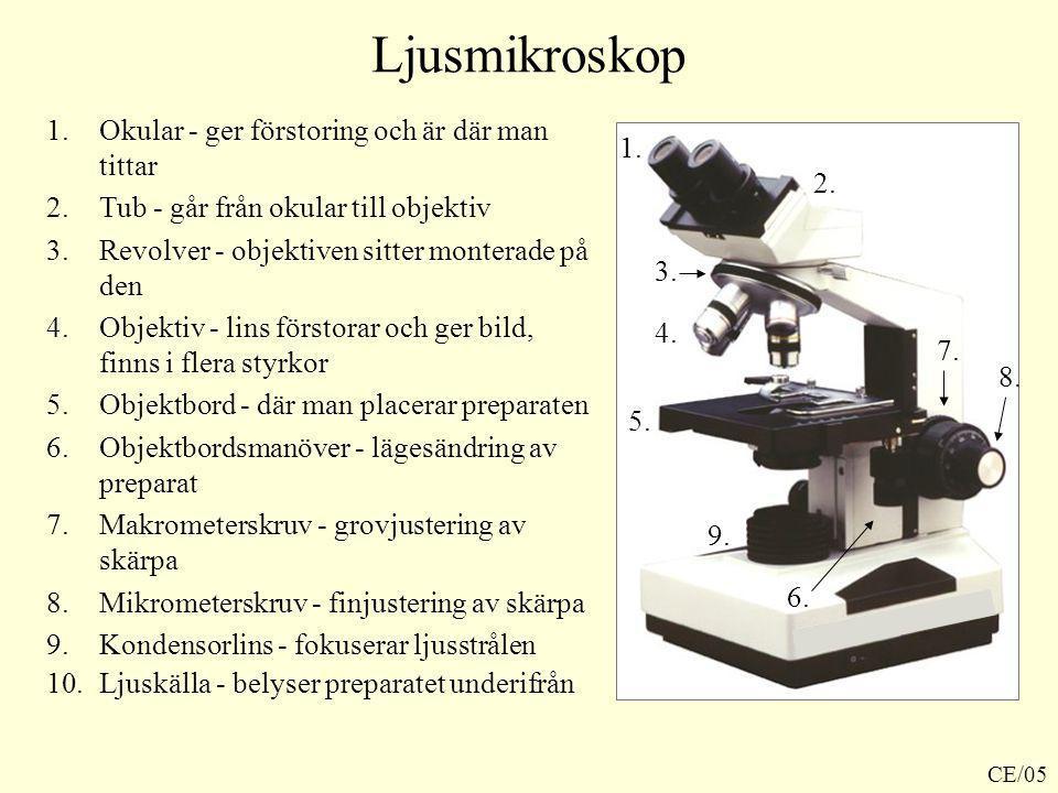 Ljusmikroskop 1.Okular - ger förstoring och är där man tittar 2.Tub - går från okular till objektiv 3.Revolver - objektiven sitter monterade på den 4.