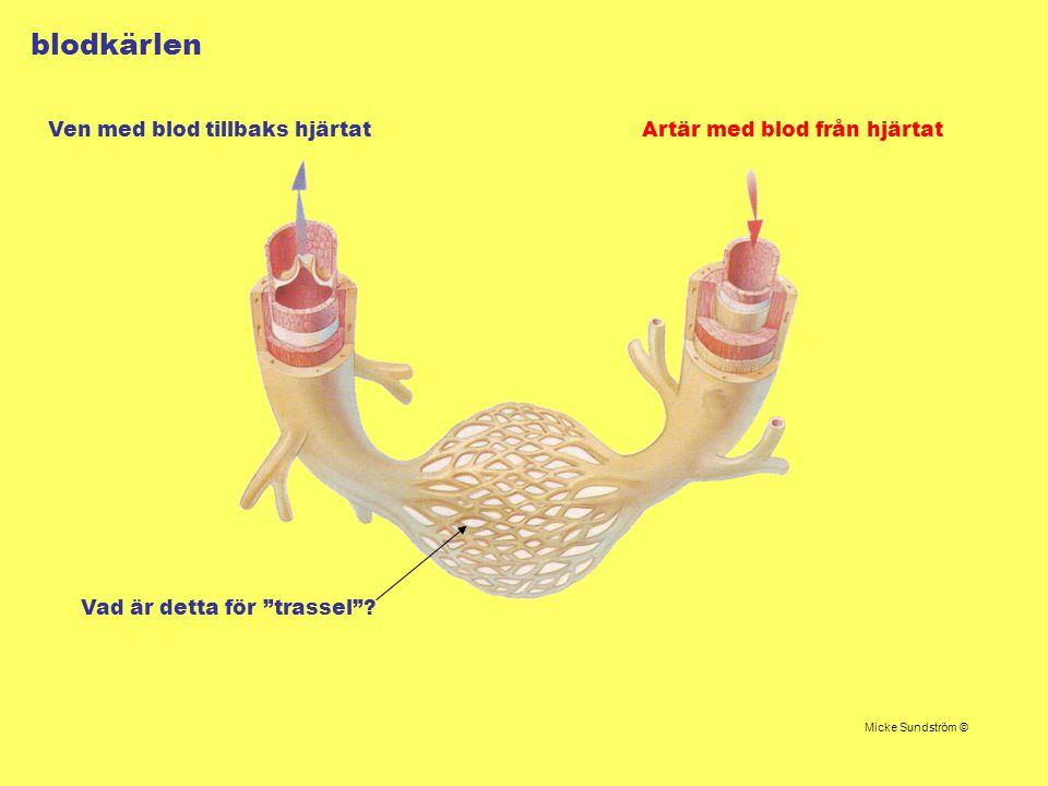 """blodkärlen Artär med blod från hjärtatVen med blod tillbaks hjärtat Micke Sundström © Vad är detta för """"trassel""""?"""