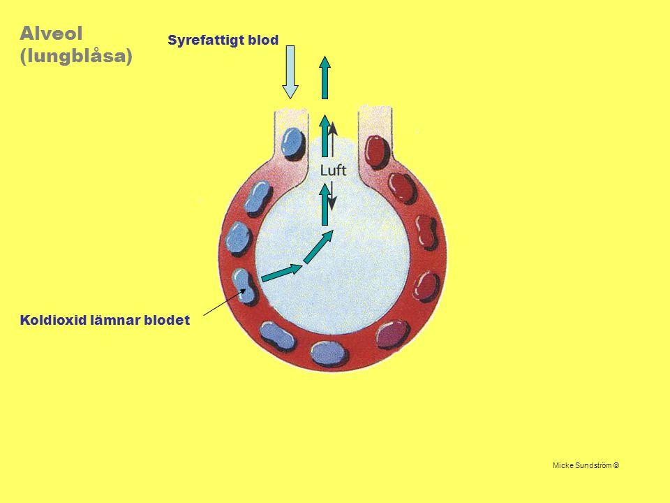 Syrefattigt blod Koldioxid lämnar blodet Alveol (lungblåsa) Micke Sundström ©