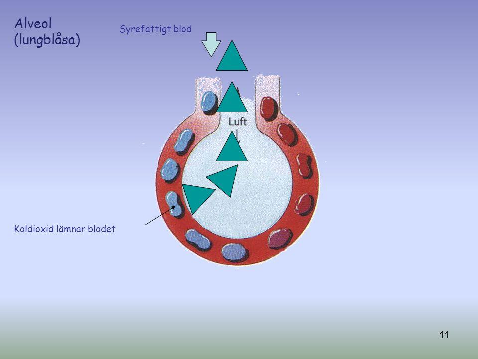 Syrefattigt blod Koldioxid lämnar blodet Alveol (lungblåsa) 11