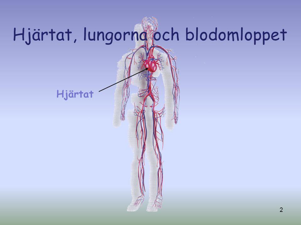 Hjärtat, lungorna och blodomloppet Hjärtat 2