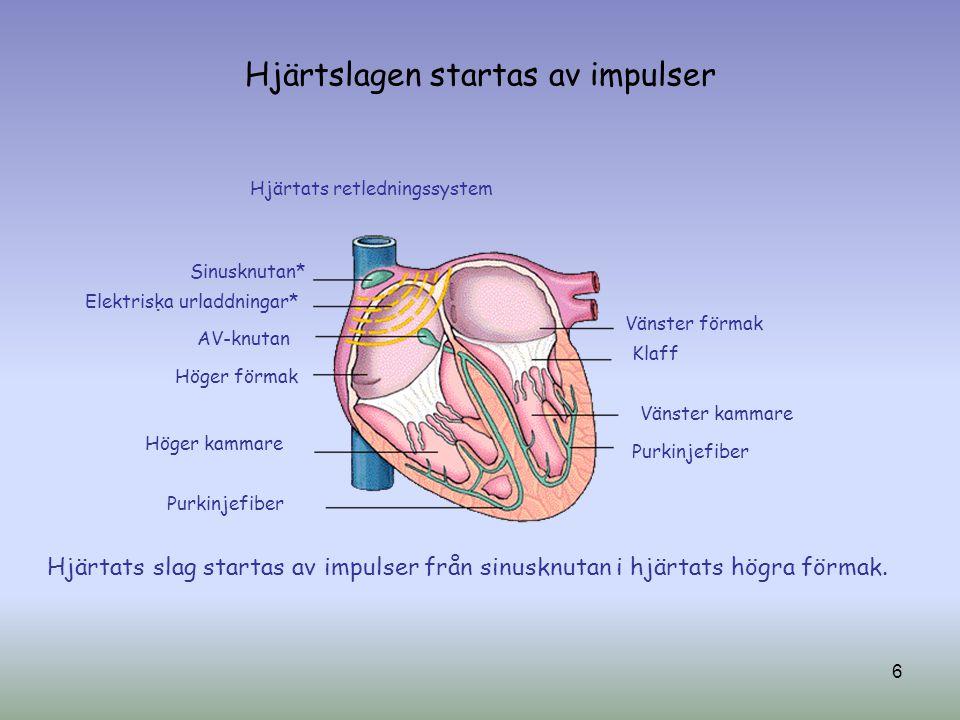 Hjärtslagen startas av impulser Sinusknutan* Elektriska urladdningar* AV-knutan Höger förmak Höger kammare Purkinjefiber Vänster förmak Klaff Vänster