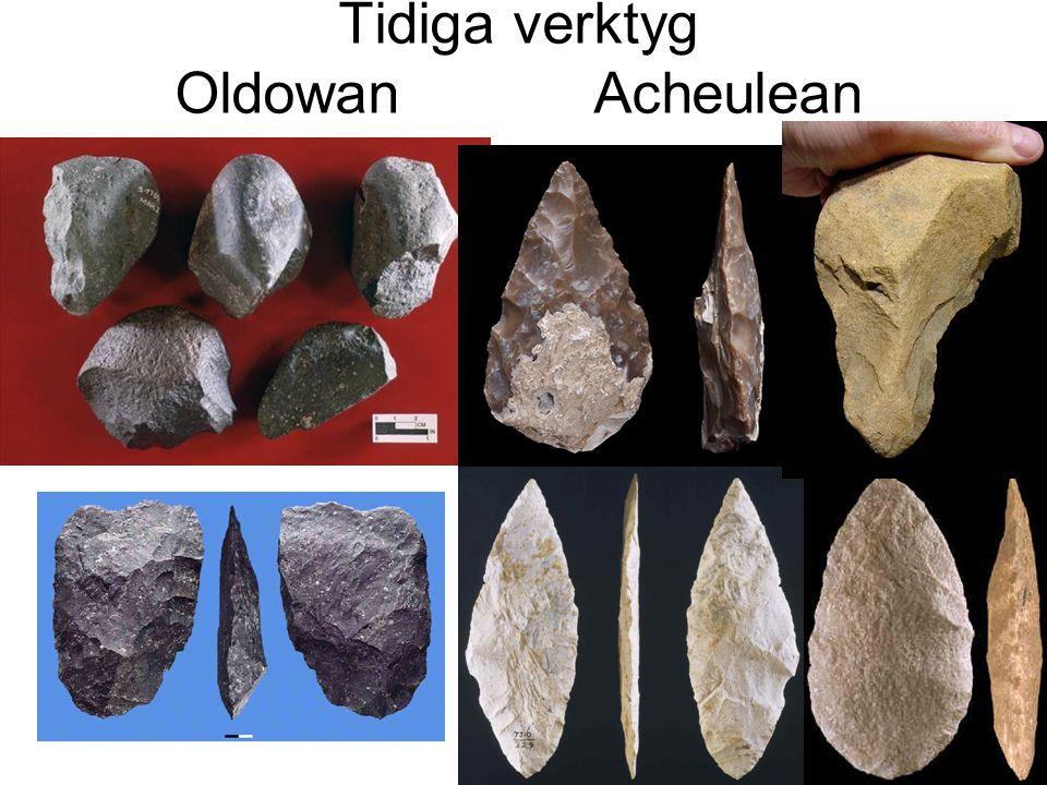 Tidiga verktyg OldowanAcheulean