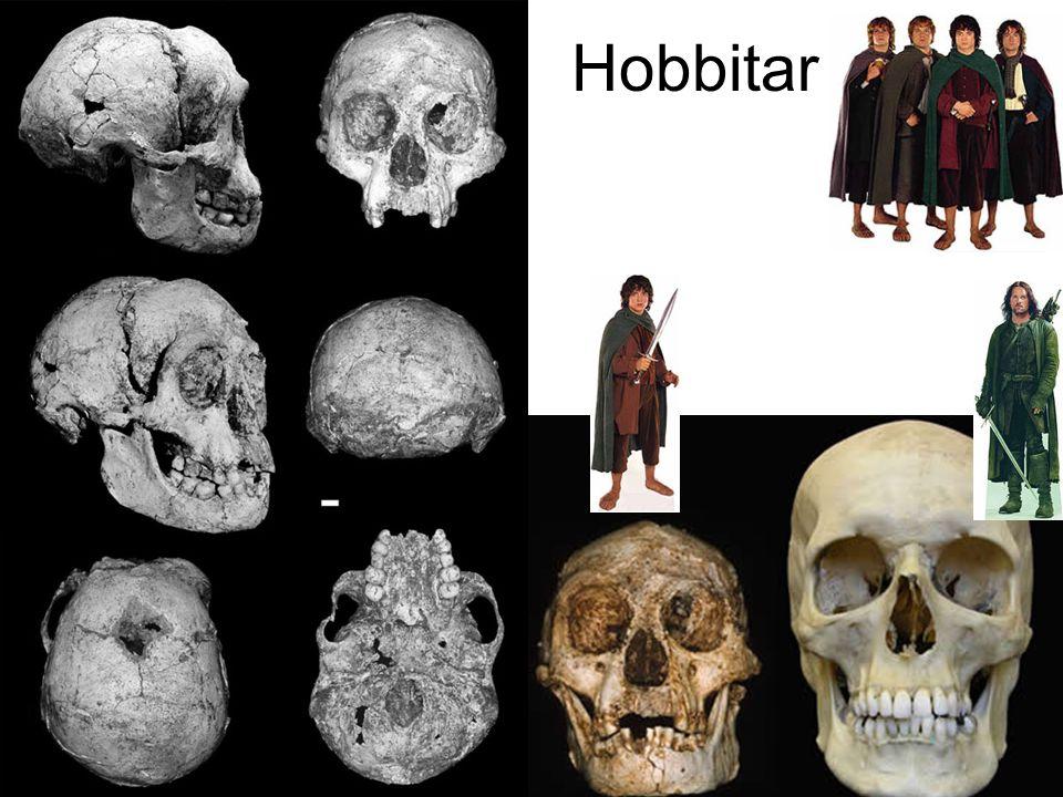 Hobbitar