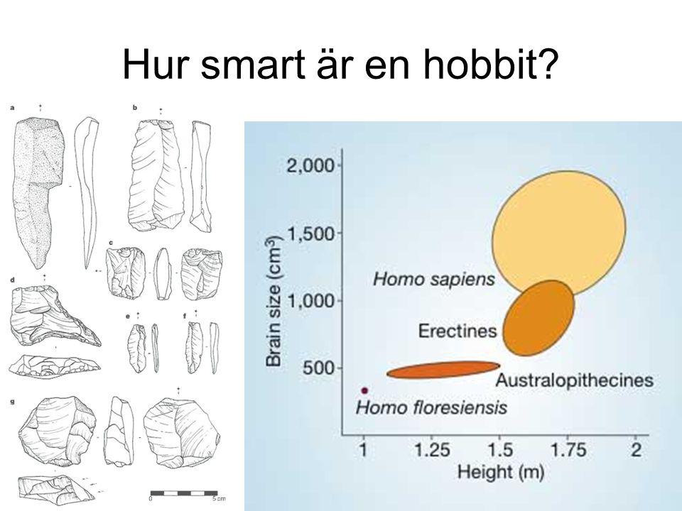Hur smart är en hobbit?