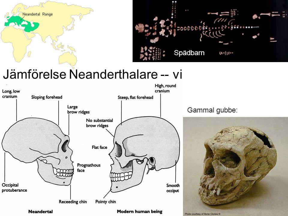 Neanderthalkultur?