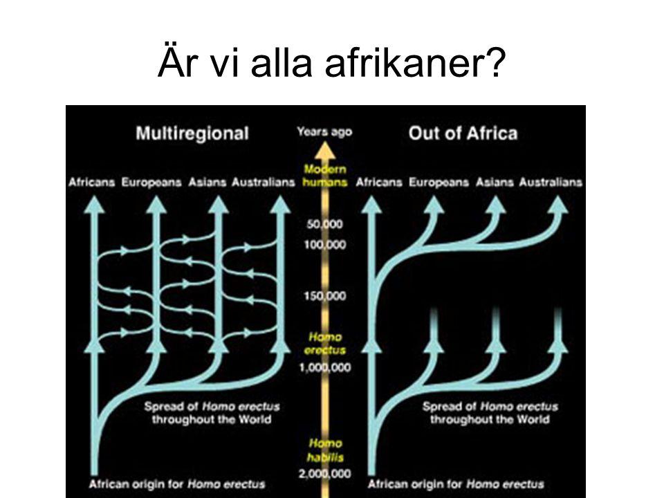 Vad talar för Out of Africa Fossil.Äldsta Homo sapiens i Afrika.