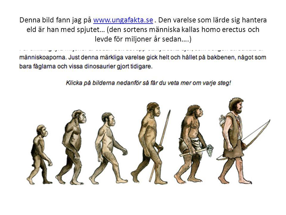 Denna bild fann jag på www.ungafakta.se. Den varelse som lärde sig hantera eld är han med spjutet… (den sortens människa kallas homo erectus och levde