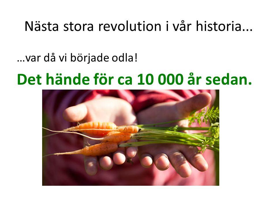 Innan dess… …hade alla människor alltid fått all mat från att: samla frön och nötter plocka bär och frukt äta blad, rötter, larver, maskar, insekter och snäckor fånga små och stora djur