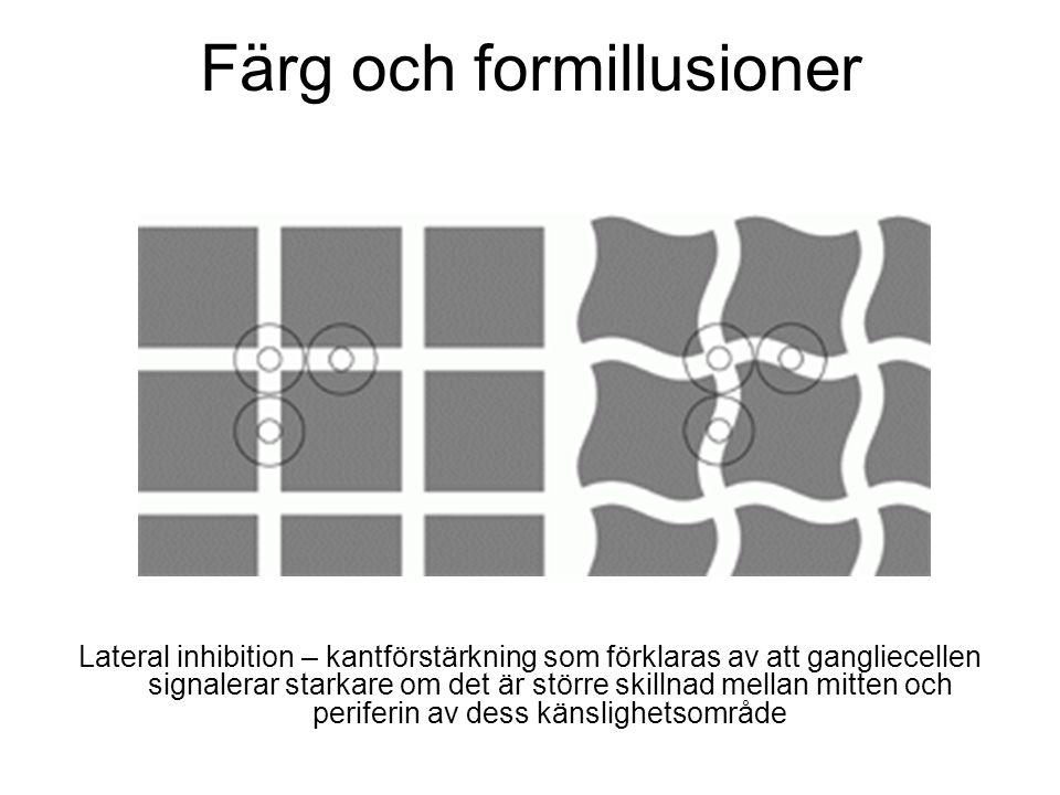 Lateral inhibition – kantförstärkning som förklaras av att gangliecellen signalerar starkare om det är större skillnad mellan mitten och periferin av