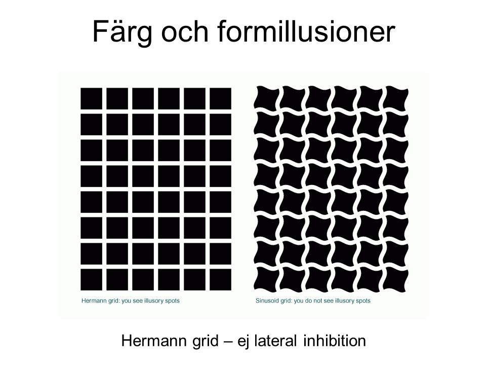 Hermann grid – ej lateral inhibition Färg och formillusioner