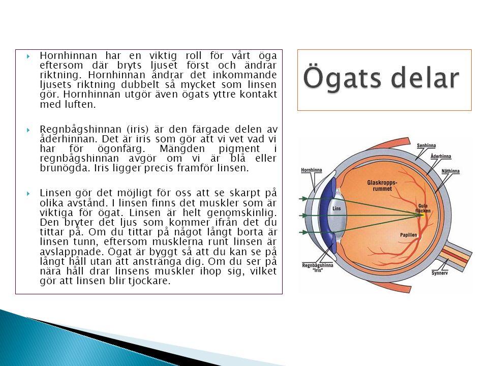  Hornhinnan har en viktig roll för vårt öga eftersom där bryts ljuset först och ändrar riktning. Hornhinnan ändrar det inkommande ljusets riktning du