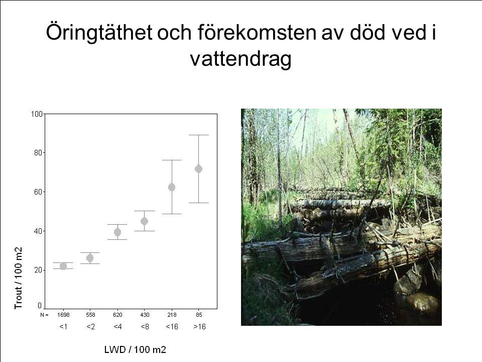 Öringtäthet och förekomsten av död ved i vattendrag