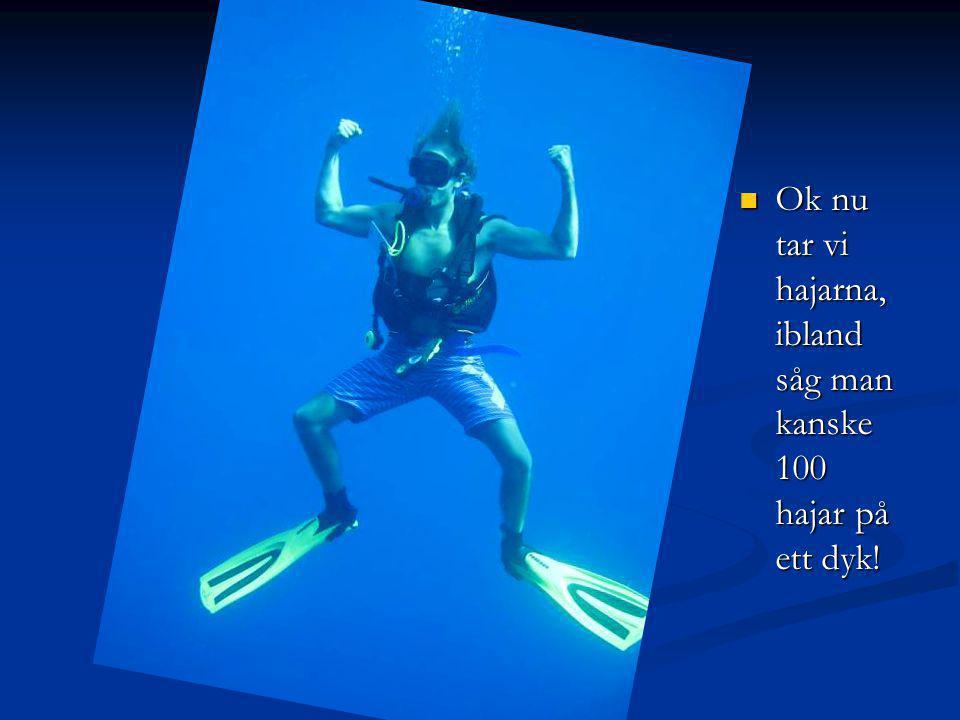 Ok nu tar vi hajarna, ibland såg man kanske 100 hajar på ett dyk.