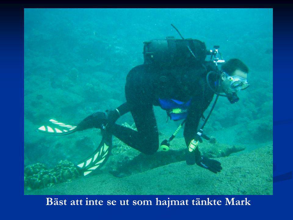 Bäst att inte se ut som hajmat tänkte Mark
