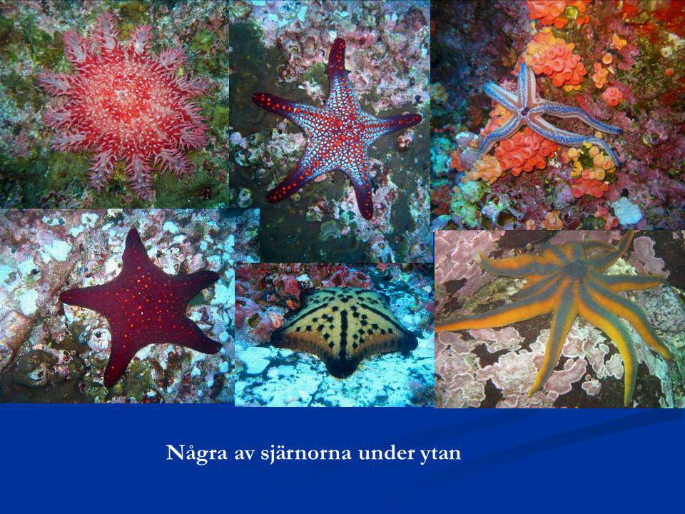 Några av sjärnorna under ytan