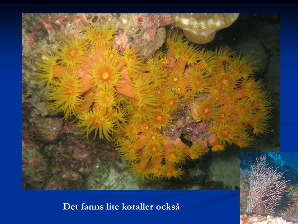 Det fanns lite koraller också