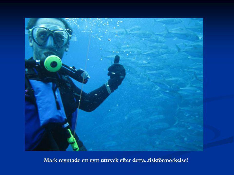 Mark myntade ett nytt uttryck efter detta..fiskförmörkelse!