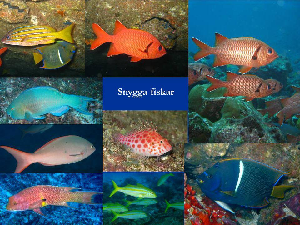 Snygga fiskar