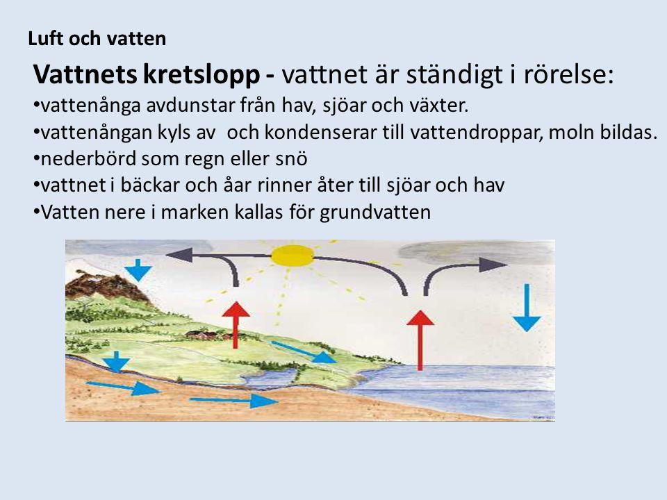 Vattnets kretslopp - vattnet är ständigt i rörelse: vattenånga avdunstar från hav, sjöar och växter. vattenångan kyls av och kondenserar till vattendr