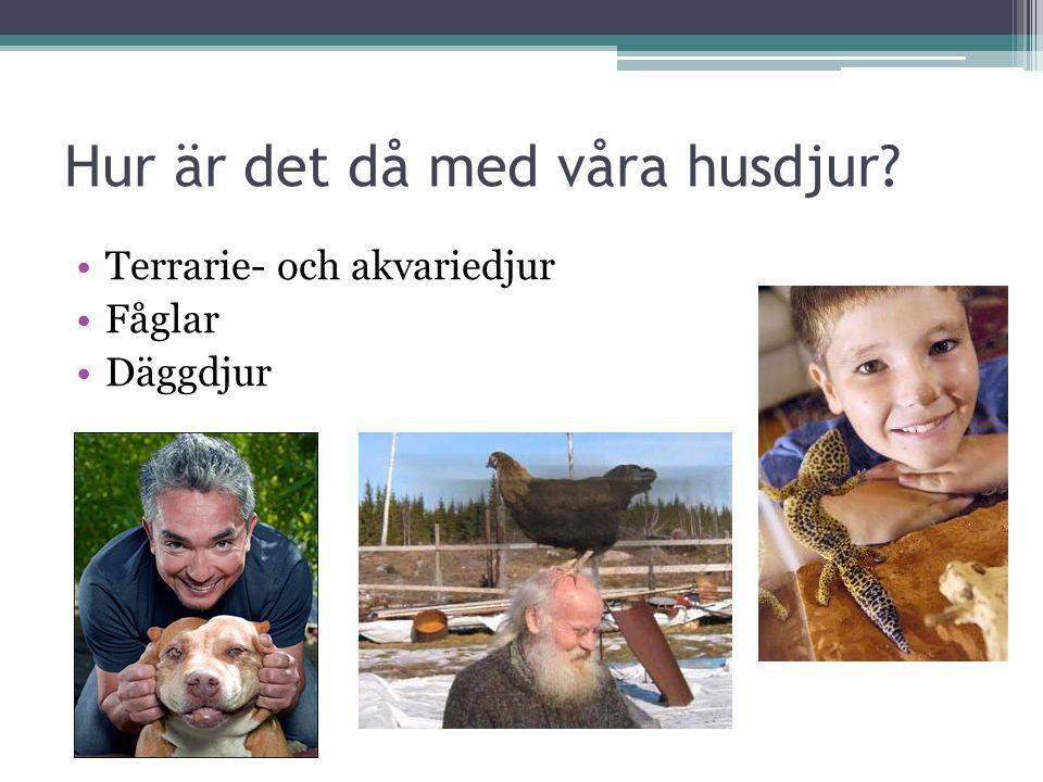 Hur är det då med våra husdjur? Terrarie- och akvariedjur Fåglar Däggdjur