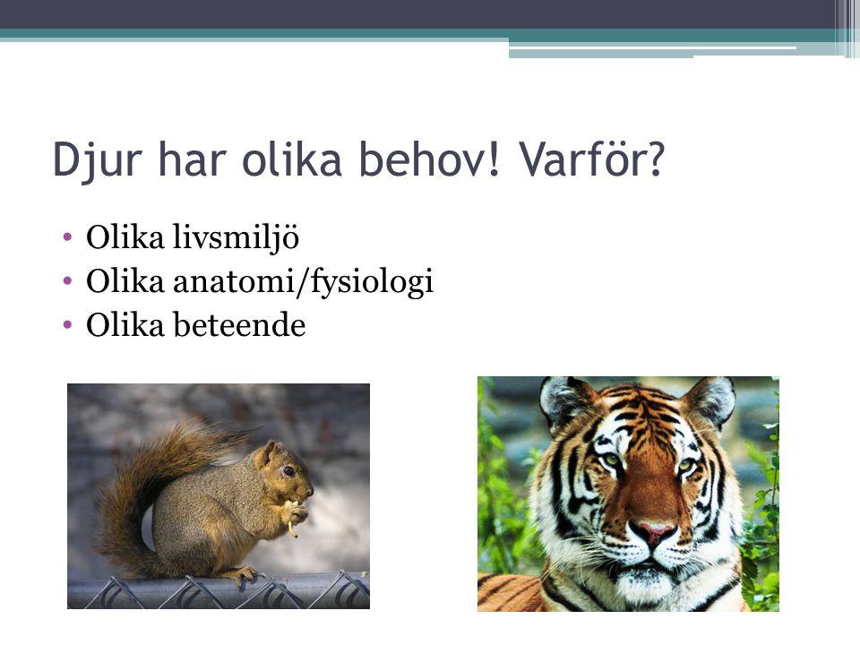 Djur har olika behov! Varför? Olika livsmiljö Olika anatomi/fysiologi Olika beteende