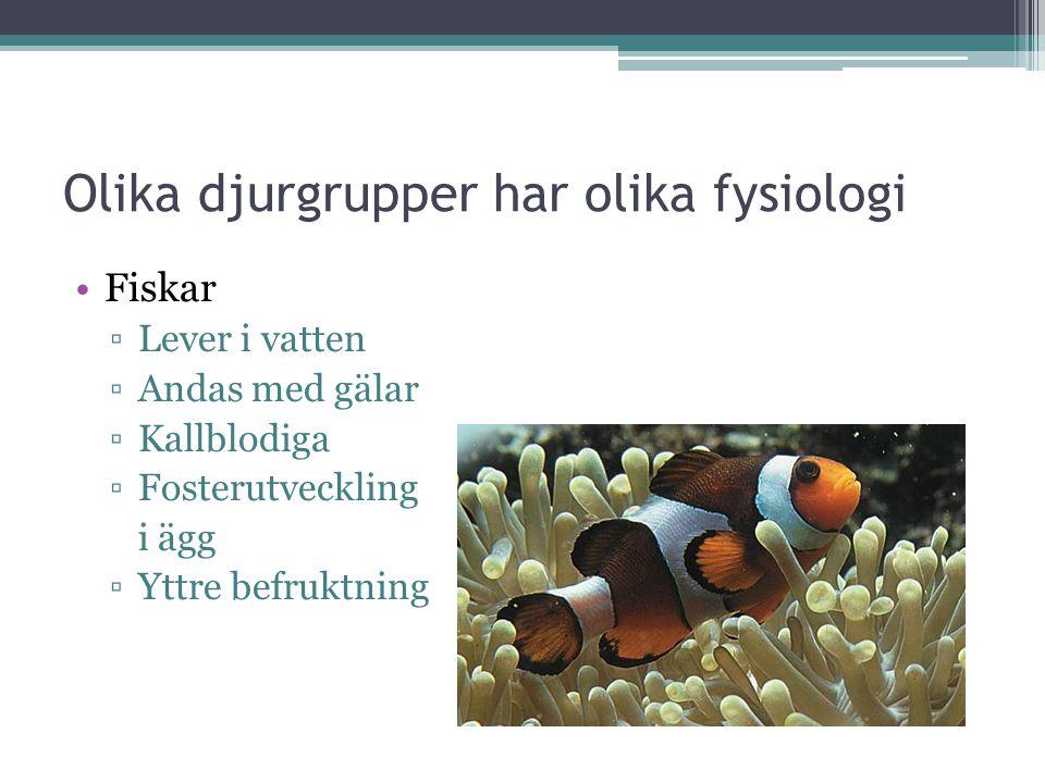 Olika djurgrupper har olika fysiologi Fiskar ▫Lever i vatten ▫Andas med gälar ▫Kallblodiga ▫Fosterutveckling i ägg ▫Yttre befruktning