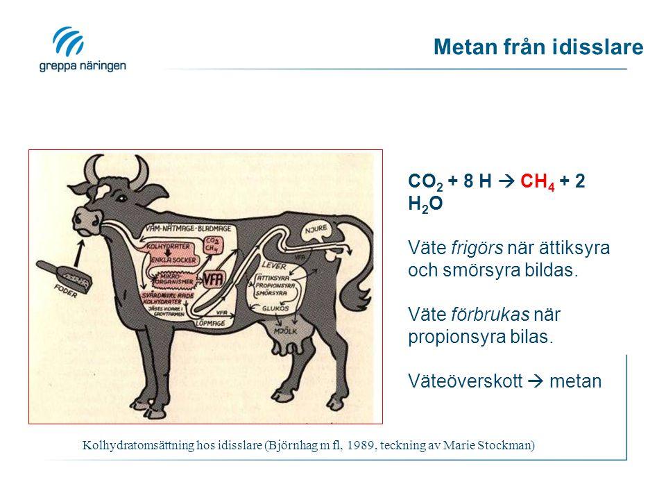 Metan från idisslare Kolhydratomsättning hos idisslare (Björnhag m fl, 1989, teckning av Marie Stockman) CO 2 + 8 H  CH 4 + 2 H 2 O Väte frigörs när ättiksyra och smörsyra bildas.