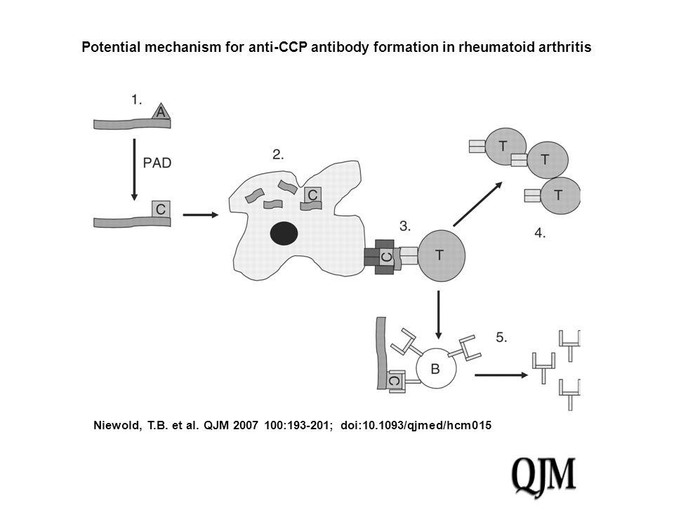 Niewold, T.B. et al. QJM 2007 100:193-201; doi:10.1093/qjmed/hcm015 Potential mechanism for anti-CCP antibody formation in rheumatoid arthritis