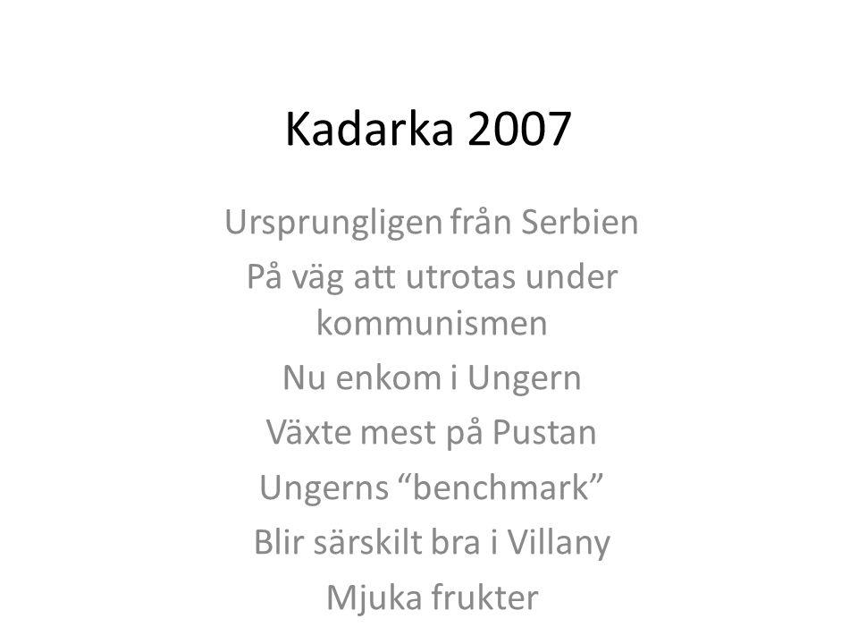 Kadarka 2007 Ursprungligen från Serbien På väg att utrotas under kommunismen Nu enkom i Ungern Växte mest på Pustan Ungerns benchmark Blir särskilt bra i Villany Mjuka frukter