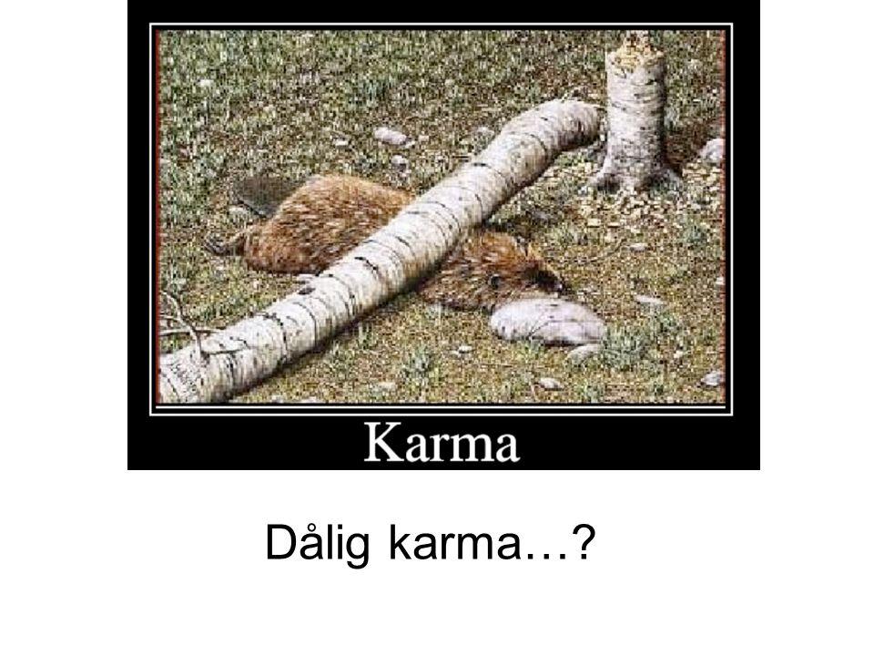 Dålig karma…?