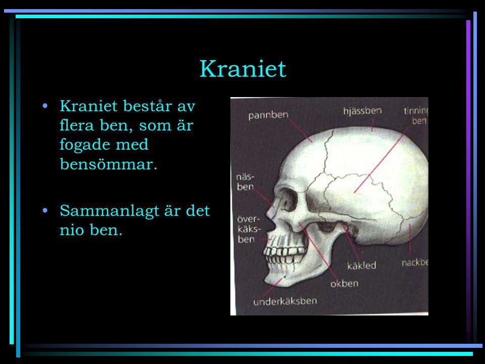 Kraniet Kraniet består av flera ben, som är fogade med bensömmar. Sammanlagt är det nio ben.