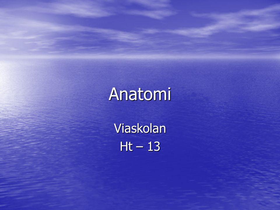 Anatomi Viaskolan Ht – 13 Ninweh, Ilona & Björn