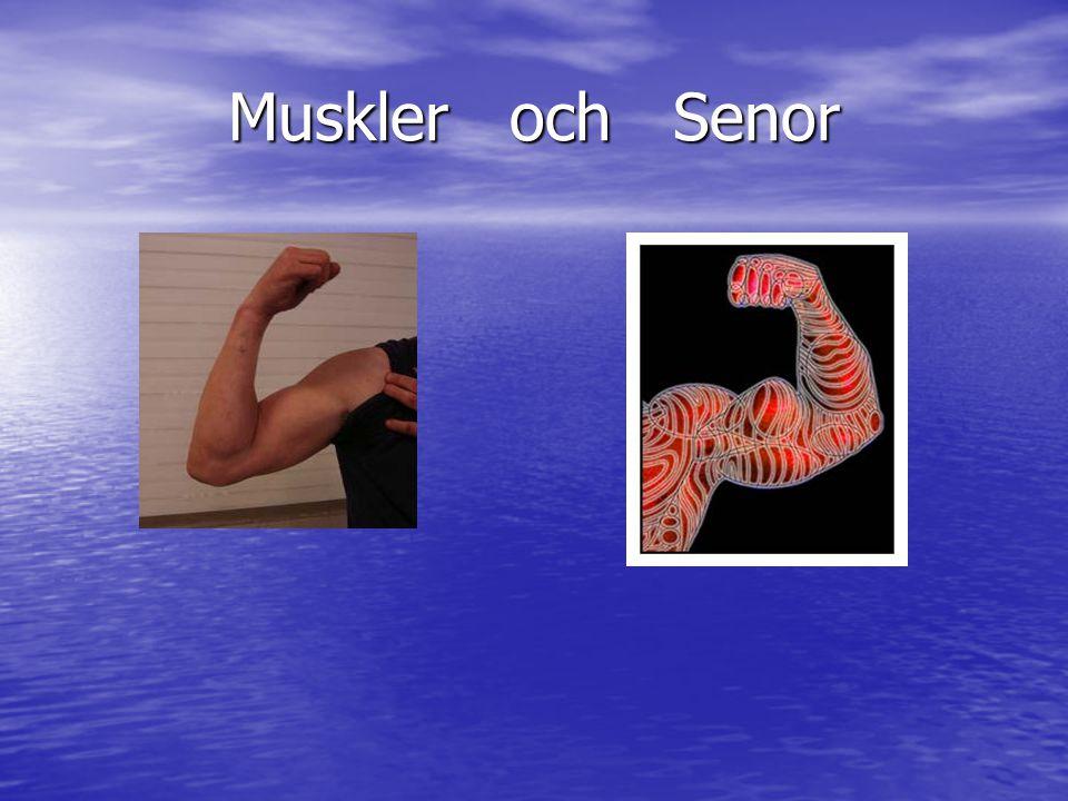 Muskler och Senor
