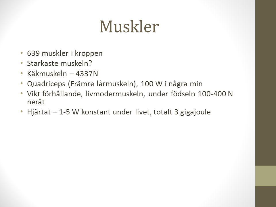 Muskler 639 muskler i kroppen Starkaste muskeln? Käkmuskeln – 4337N Quadriceps (Främre lårmuskeln), 100 W i några min Vikt förhållande, livmodermuskel