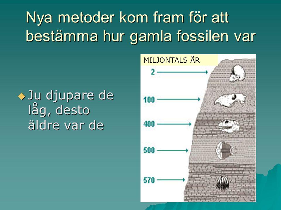 Nya upptäckter  Man hittade fossil av djur som var utdöda
