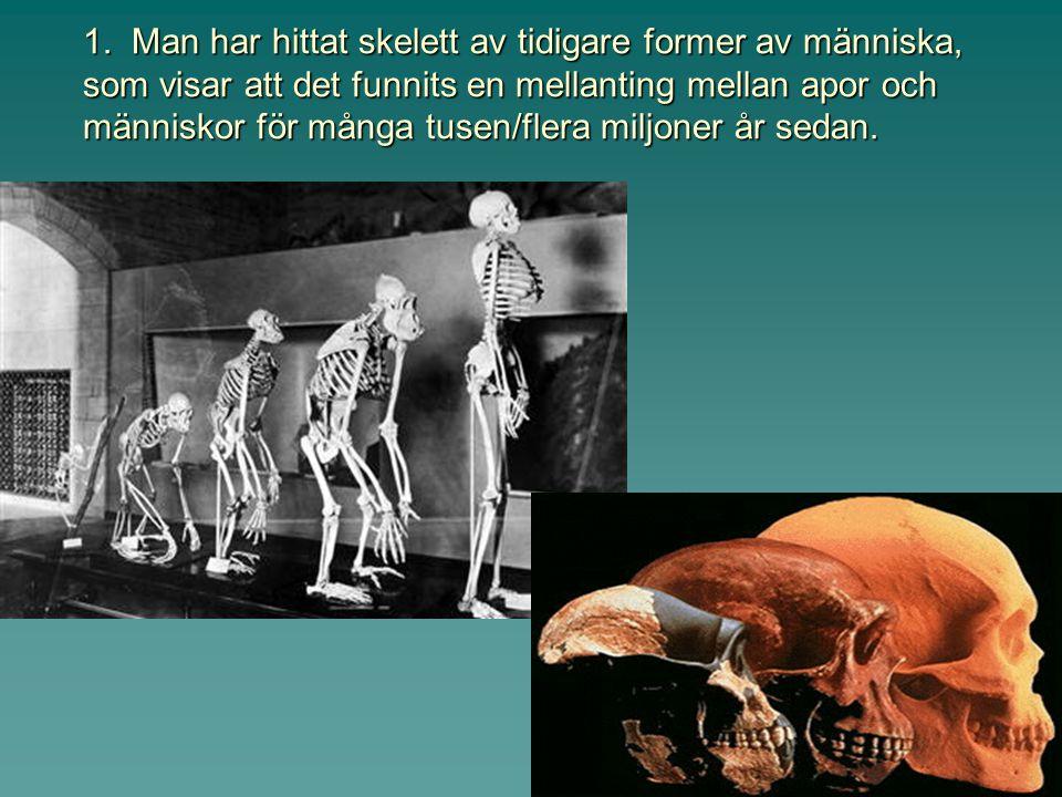 Finns det några bevis för evolution, eller några observationer att det faktiskt hänt?