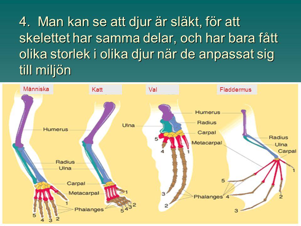 Ibland föds människor med rester från tidigare stadier kvar, t.ex. svans