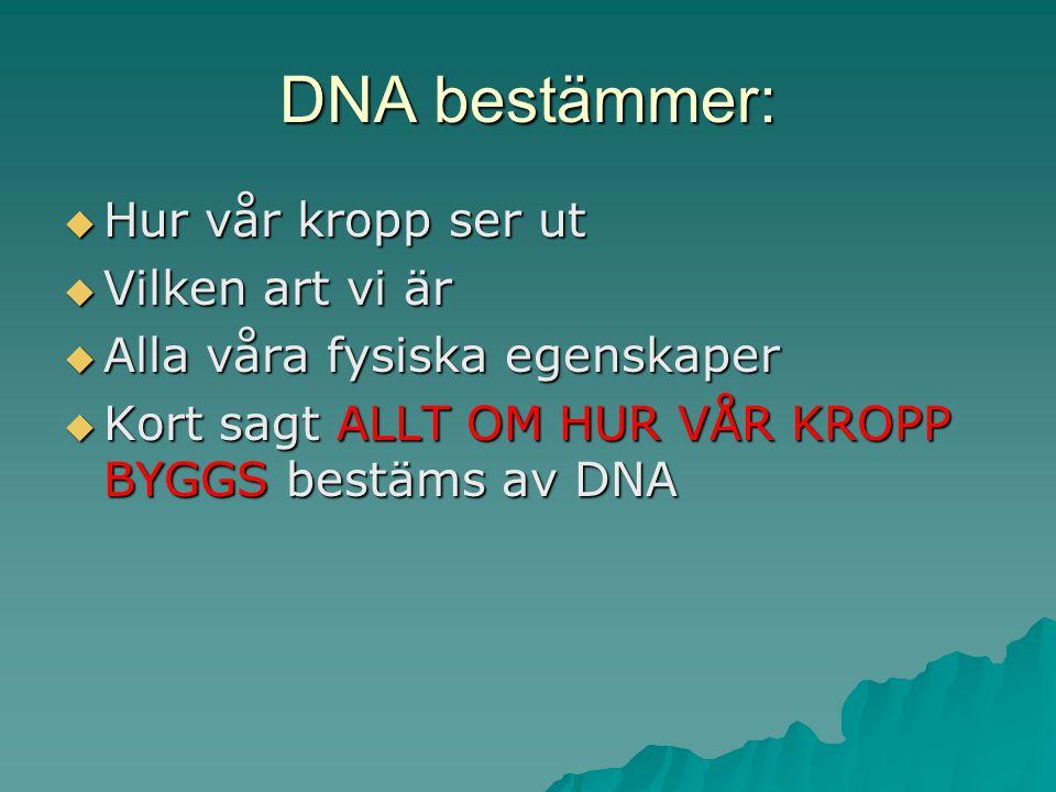 DNA BESTÄMMER HUR VI SER UT
