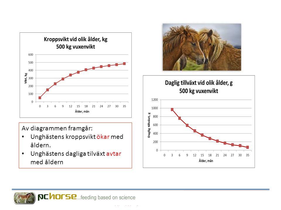 Av diagrammen framgår: Unghästens kroppsvikt ökar med åldern.