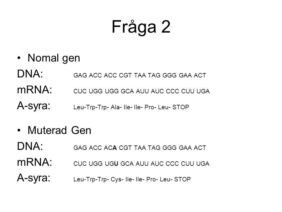 Fråga 2 Nomal gen DNA: GAG ACC ACC CGT TAA TAG GGG GAA ACT mRNA: CUC UGG UGG GCA AUU AUC CCC CUU UGA A-syra: Leu-Trp-Trp- Ala- Ile- Ile- Pro- Leu- STO