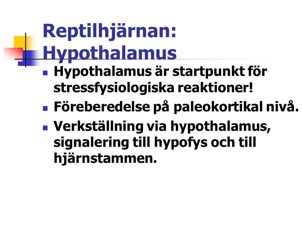 Reptilhjärnan: Hypothalamus Hypothalamus är startpunkt för stressfysiologiska reaktioner! Föreberedelse på paleokortikal nivå. Verkställning via hypot