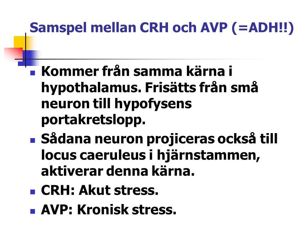 Samspel mellan CRH och AVP (=ADH!!) Kommer från samma kärna i hypothalamus. Frisätts från små neuron till hypofysens portakretslopp. Sådana neuron pro