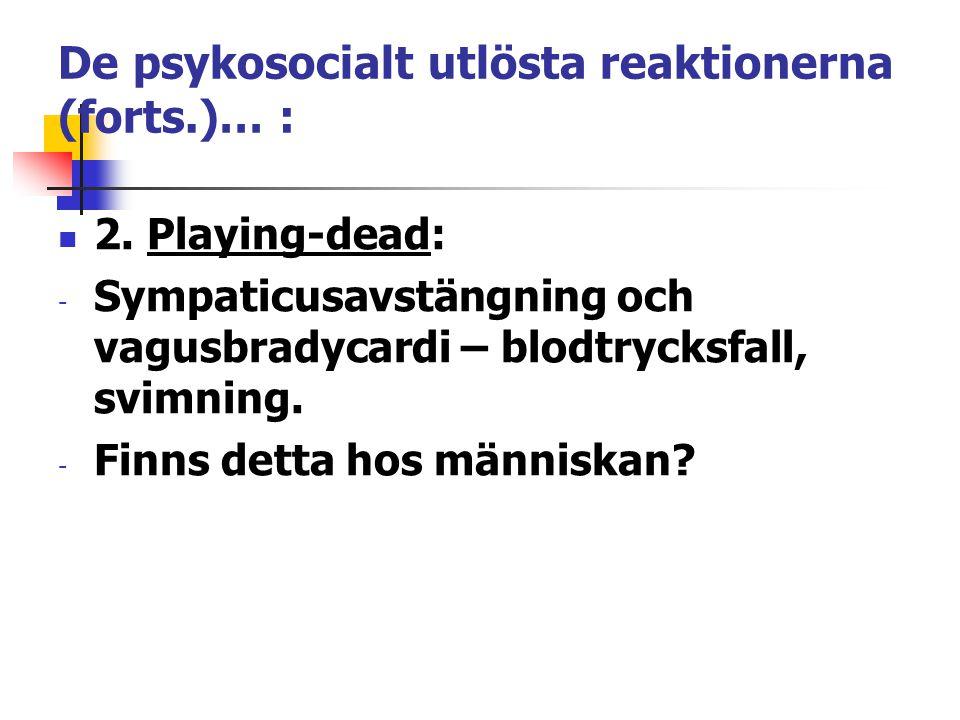 De psykosocialt utlösta reaktionerna (forts.)… : 2. Playing-dead: - Sympaticusavstängning och vagusbradycardi – blodtrycksfall, svimning. - Finns dett