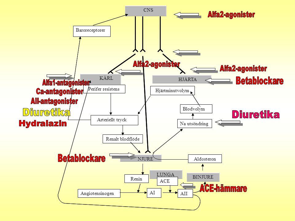 LUNGA HJÄRTA Angiotensinoge AI AII Renalt blodflöde KÄRL CNS Renin ACE Perifer resistens Angiotensinogen BINJURE Aldosteron Blodvolym Na utsöndring NJ
